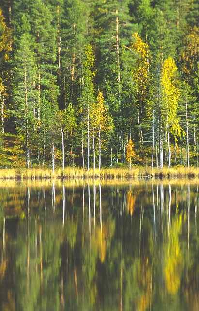 skog_vatten_0002179r