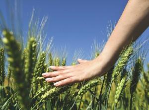 Olika bygder har olika förutsättningar och gårdsstödet bör kunna anpassas för att både stödja ett aktivt jordbruk och bevara ett rikt odlingslandskap visar en ny studie från Jordbruksverket.