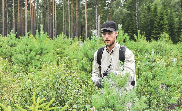 Redan utplanterade plantor kan behandlas med en enkel utrustning, till exempel en handspruta.