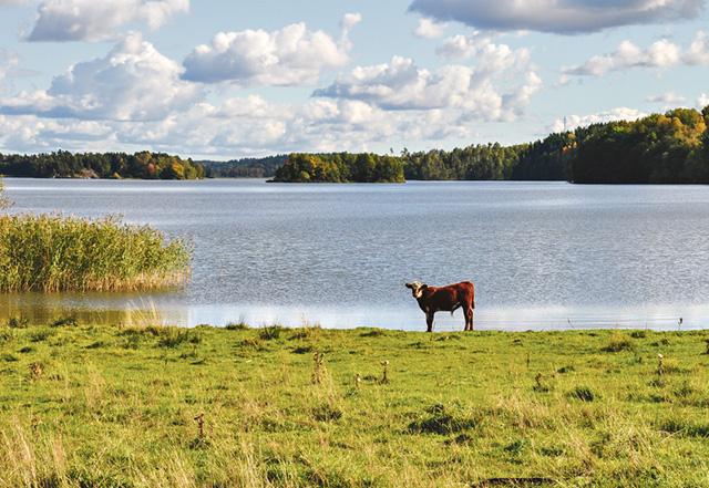 Vy över Svinstadsjön från Lerboga i Bankekind utanför Linköping. Genom att minska vitfisken i sjön har man uppnått synligt bättre vattenkvalitet.
