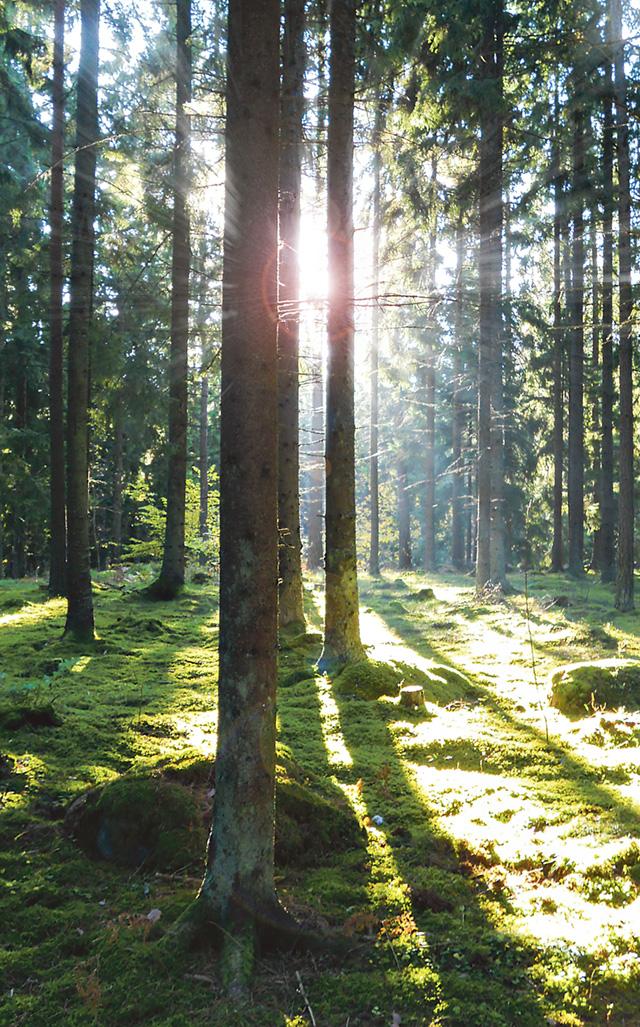 Skogsstyrelsen lyfter under hösten hur Sveriges skogsägare kan bidra till att kulturminnen bevaras till kommande generationer.