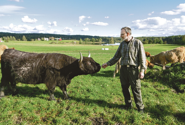 Per-Holger Gustafsson driver uppfödning av kreatursrasen highland cattle i mindre skala. Rasen är förhållandevis lättskött och därför går det bra att kombinera uppfödning och annat jobb.