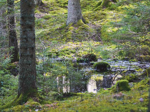 Även om den totala nederbörden ökar blir det i snitt torrare om somrarna i södra halvan av Sverige enligt Skogstyrelsens konsekvensanalys.