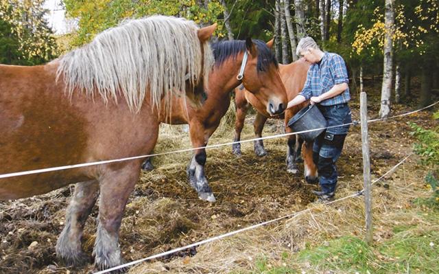 Cecilia Berntsson med hästarna hemma på Nyby. I tio år har hon och pappan Roger Berntsson drivit den gemensamma firman Bernttek. Bild: LIZZIE GERD JANSON