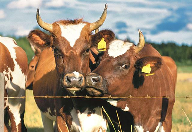 Allt mildare vintrar kommer att kräva anpassad skötsel av djur som går ute.