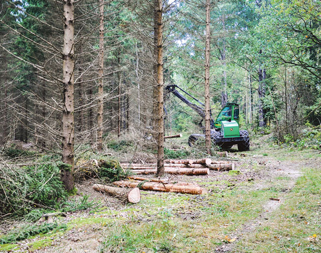 Genomsnittspriset för skogsmark i Sverige steg år 2015 till 389 kronor per skogskubikmeter enligt LRF Konsults statistik. Det är en ökning av riks genomsnittet med 4,8 procent jämfört med 2014. Bild: BO BÄCKMAN