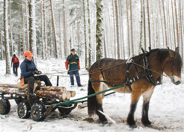 Jenny Olofsson från Trollhättan vann årets DM i skogskörning. Tillsammans med nordsvenska stoet Bergs Lilla My fick de endast 43 straffpoäng.