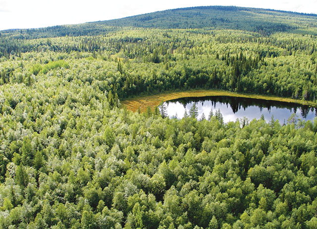 Linavare-Råneträsket i Gällivare. Typiskt för området är vidsträckta myr-naturskogsmosaiker men det innefattar också ett par flacka skogsberg med gamla barrnaturskogar. Bakom bergen i väster ansluter området till de vidsträckta urskogarna i Muddus nationalpark och Laponia världsarvsområde. Bild: FRÉDÉRIC FORSMARK