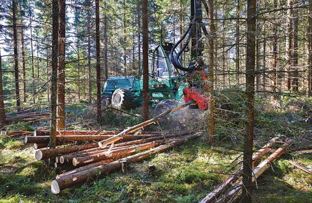 Södra skog som tidigare har infört markskoningsgaranti i slutavverkning utökar nu med en ny gallringstjänst med markskoningsgaranti. Bild: MATS SAMUELSSON
