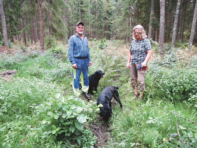 Det syns inte så mycket av det gamla skogsdiket. Thomas och Christina Béen, här med de båda labradorerna, har röjt och dikesrensning är nu på gång.