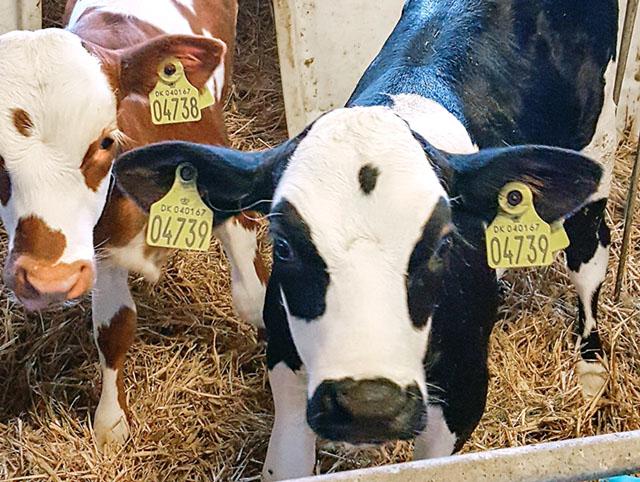 Procross är ingen ny ras. Det är en korsning av raserna Holstein, SRB och Montbeliarde. Avkommorna är friska och ger hög mjölkavkastning, god fruktsamhet och bra slaktutbyte.